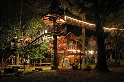 436436beautiful tree houses 21