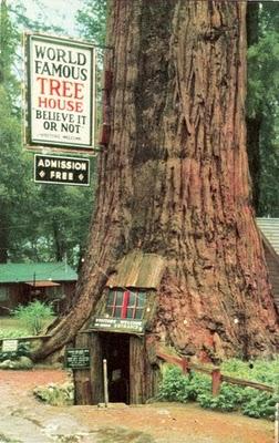 436436beautiful tree houses 23