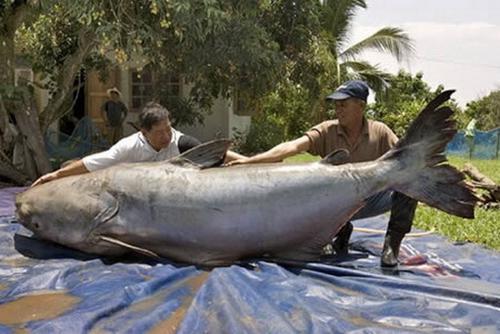 64497316 worlds biggest animals01