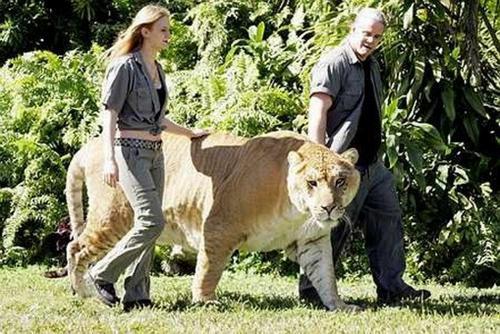 64497316 worlds biggest animals04