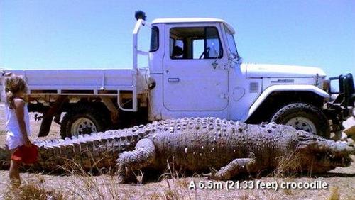 77090416 worlds biggest animals09