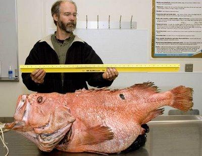 927054rockfish