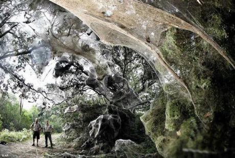 World's Biggest Spider Web
