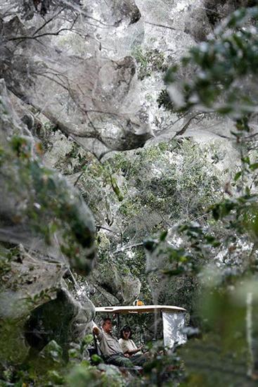 933146biggest spider web