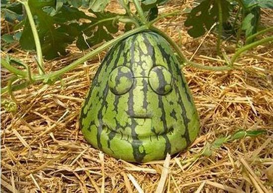 94908unusual fruit and vegetables01